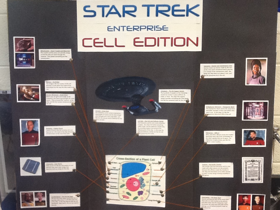 7th Grade Cell Analogy Projects