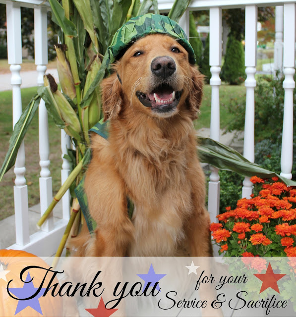 Golden Retriever dog dressed as army soldier for Veterans Day honoring veterans