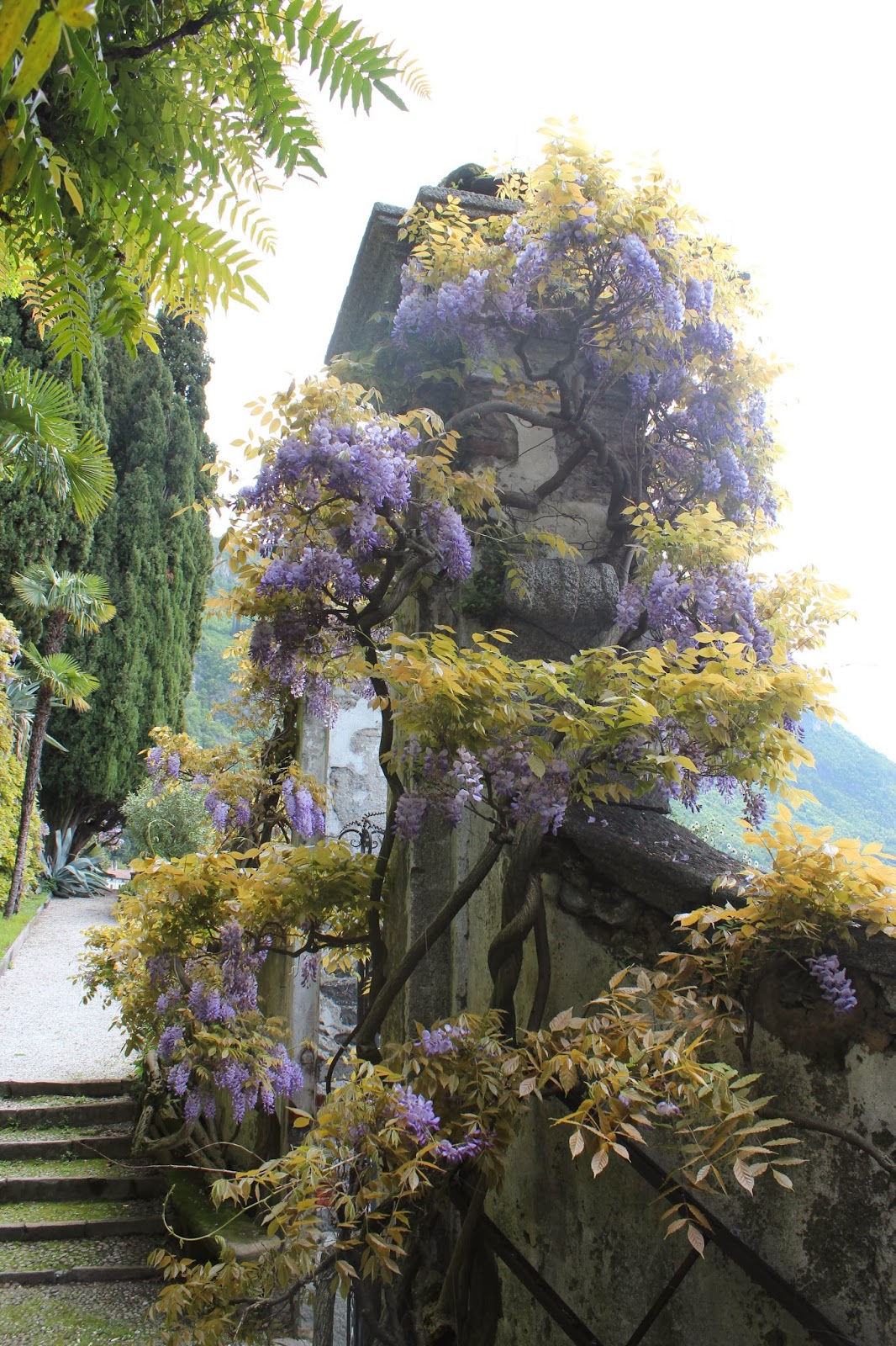 Italian Garden with Wisteria; Lake Como 4