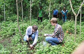 Jerman minat tanam pohon kelor di Banyuwangi.