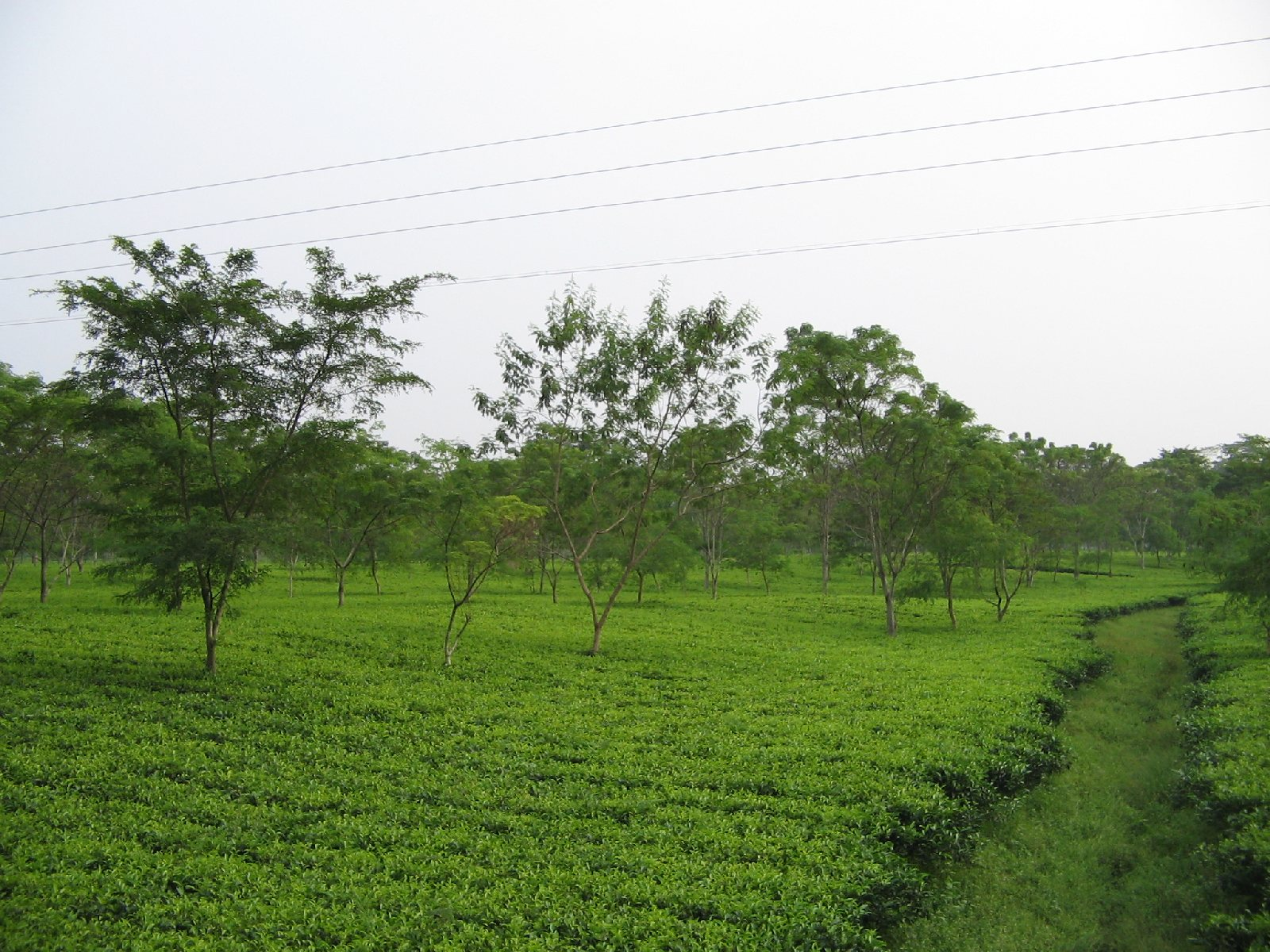 short essay on natural vegetation of india