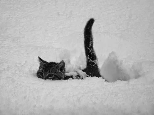 Gato escondido com o rabo de fora