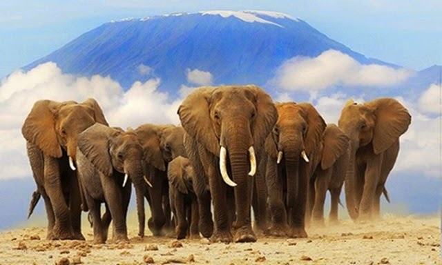 foto gajah afrika