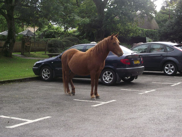 funny animals, animal pictures, horse in parking lot