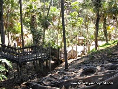 Palm Canyon in Balboa Park in San Diego, California