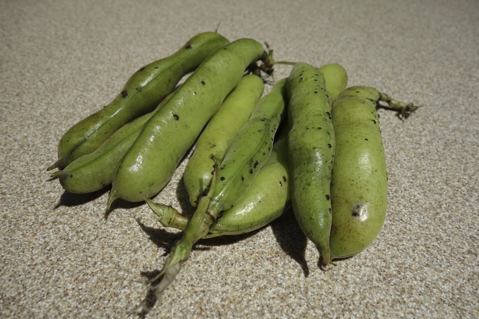 how to cook raw fava beans
