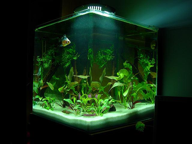 Acuario: La filtración y el mantenimiento del acuario, por Gaua