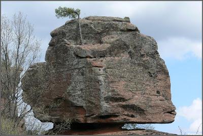 Equilibrio y vida. Pino bandera agarrado a la piedra arenisca (Chequilla)