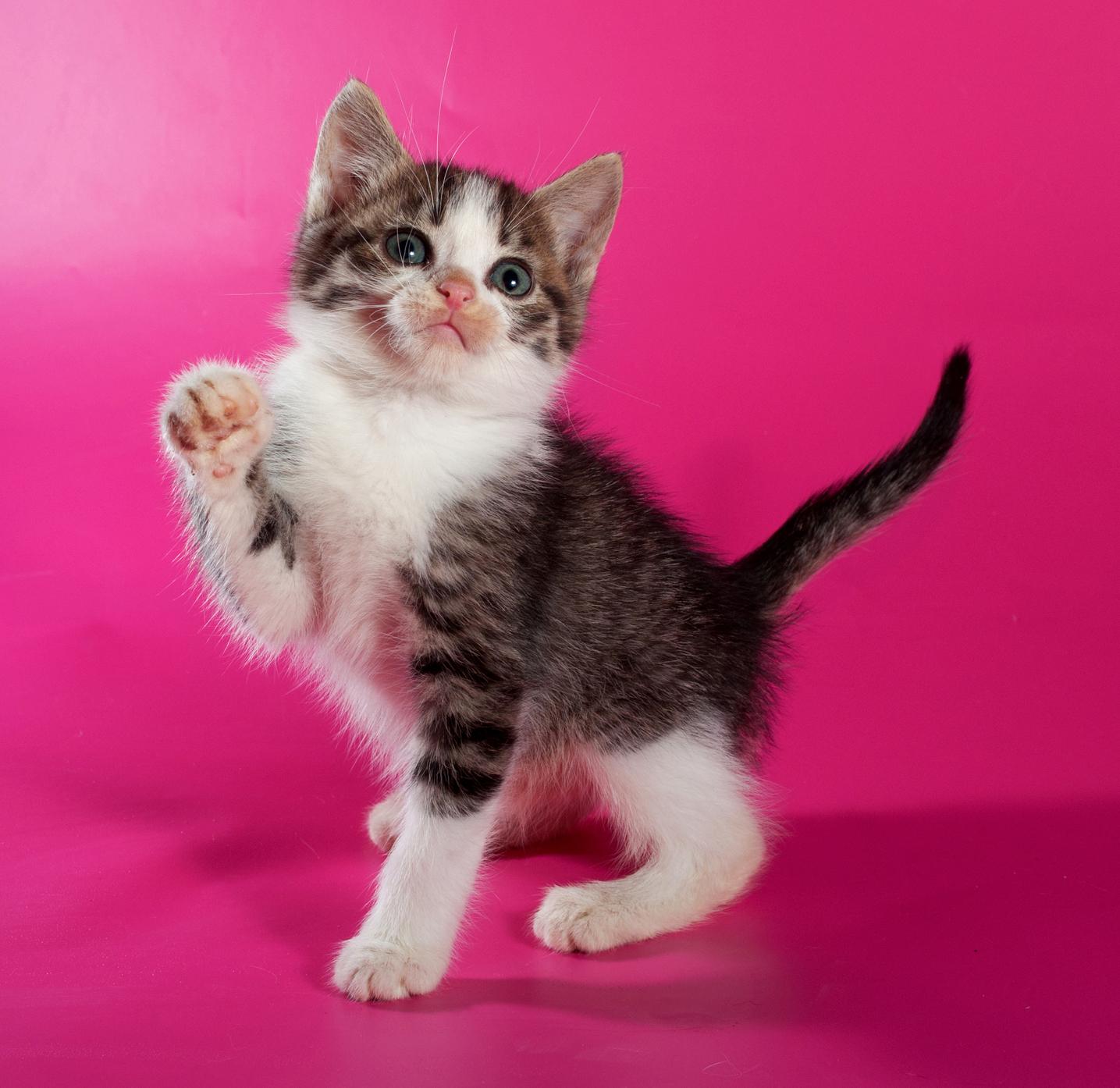Tierno gatito en fondo color fucsia - Minino | celebrity styles