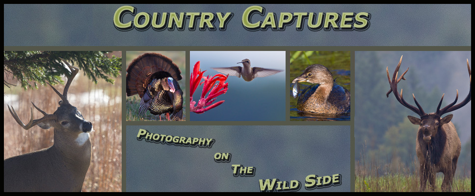 Country Captures