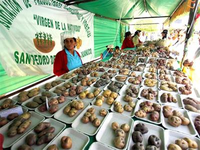 Comedores populares participarÁn en el festival de la papa nativa ...