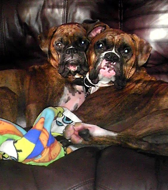 dogs, love, rocky, adrian