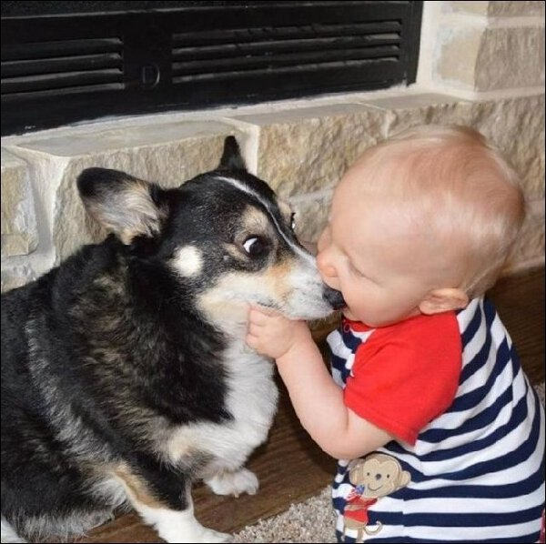 Cute dogs - part 75, best dog pictures, funny dog photos
