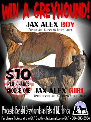 greyhound racing today