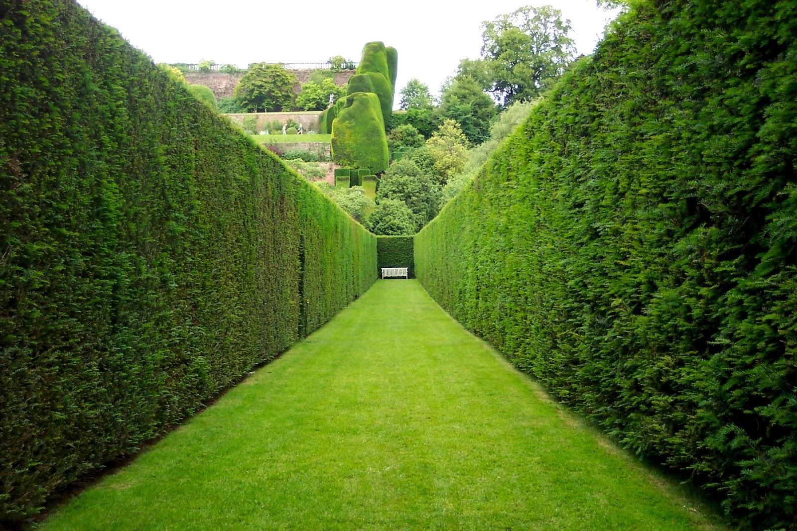 il mondo in un giardino: consigli per la potatura delle siepi - Siepe Da Giardino Piccolo