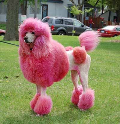 The Dog In World New Trend In Dog Design