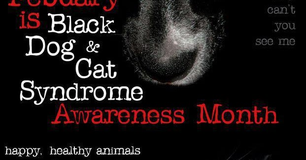 Black Dog And Cat Syndrome Aqateness Month