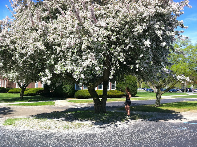 Under-the-Cherry-Blosssoms-at-Farmingdale-State-College