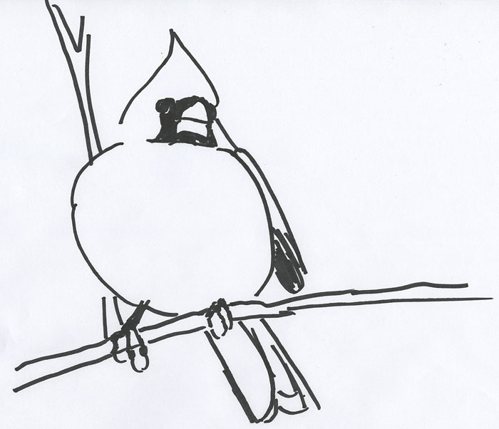 Free Coloring Book Page For A Male Northern Cardinal Red Bird