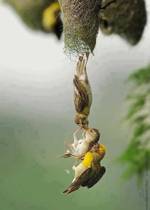 %D8%B7%D9%8A%D9%88%D8%B135 صور رمانسية طبيعية لأجمل الطيور 2014