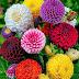 أجمل الزهور الملونة