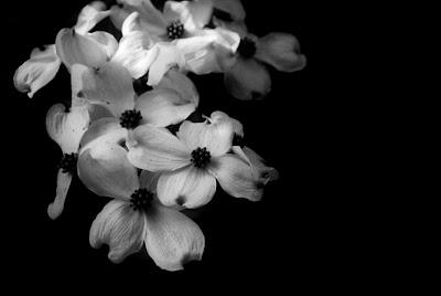 black white flower wallpapers