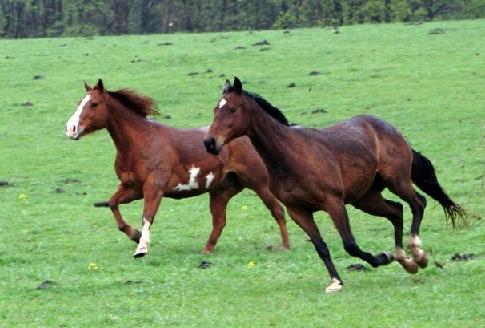 Aggressiveness And Horse A Running Horses Painting According To Vastu