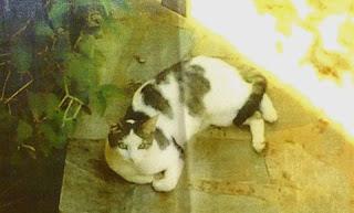 Χάθηκε ο γατούλης της φωτογραφιας στις 5/10/14 την ωρα που πηγαινε για στειρωση στην Αργυρουπολη, στην οδο Κυκλαδων 16 εξω απο το Κτηνιατριο της Κυριας Γιανναρακη