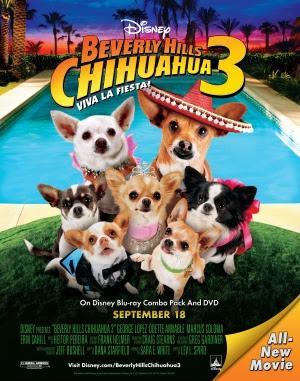 Những Chú Chó Chihuahua 3