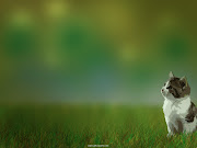Beautiful White Cute Cat Pictures / Photos / Wallpapers beautiful white cute cat pictures photos wallpapers