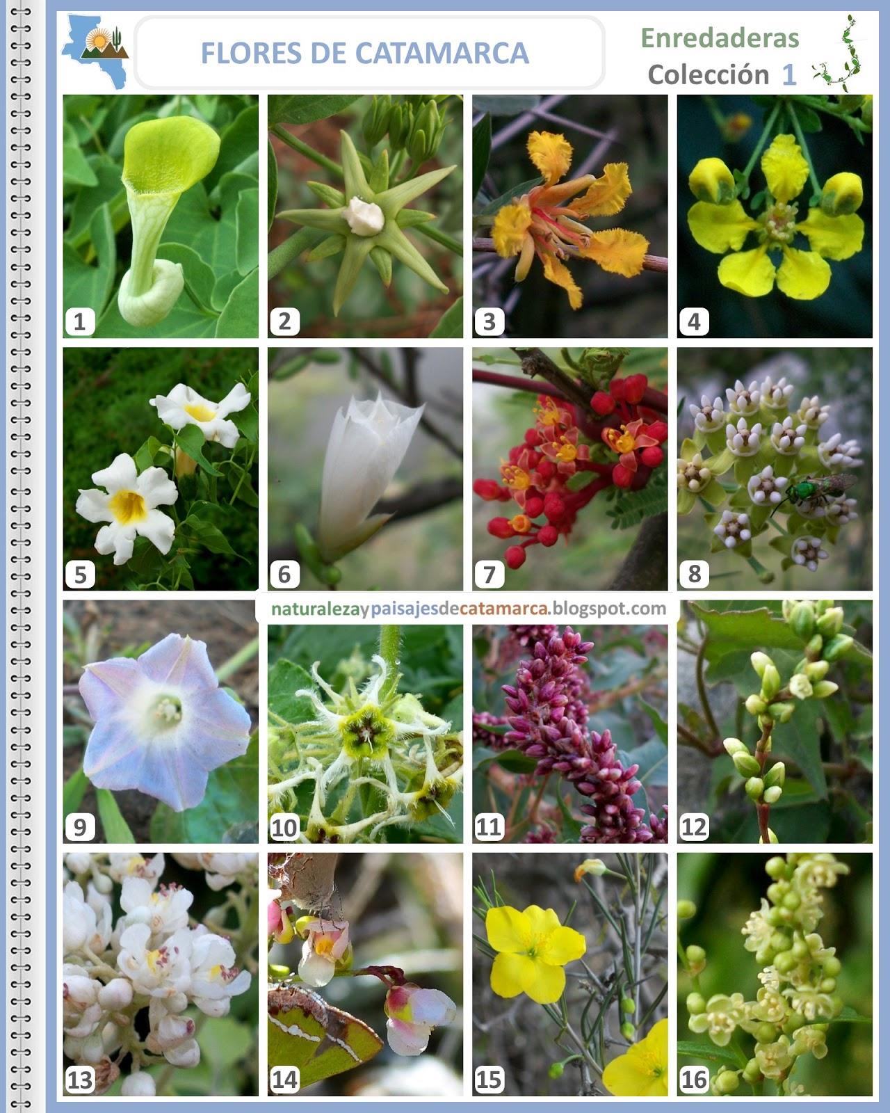 Naturaleza y paisajes de catamarca flores silvestres de for 5 plantas ornamentales con sus nombres