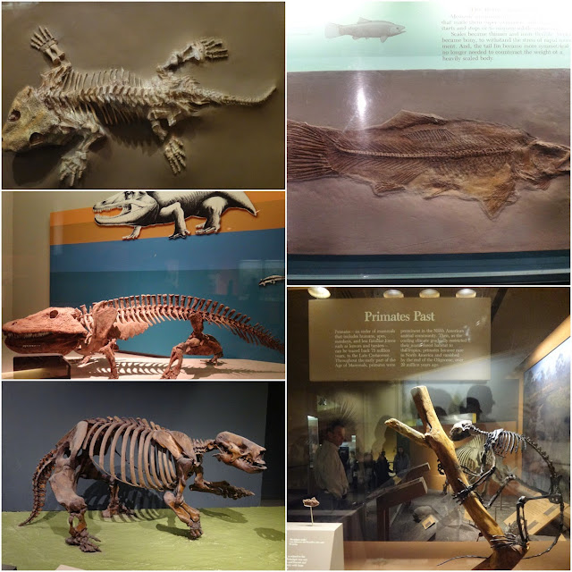 The bone skeleton of animals on land at National History Museum in Washington DC, USA