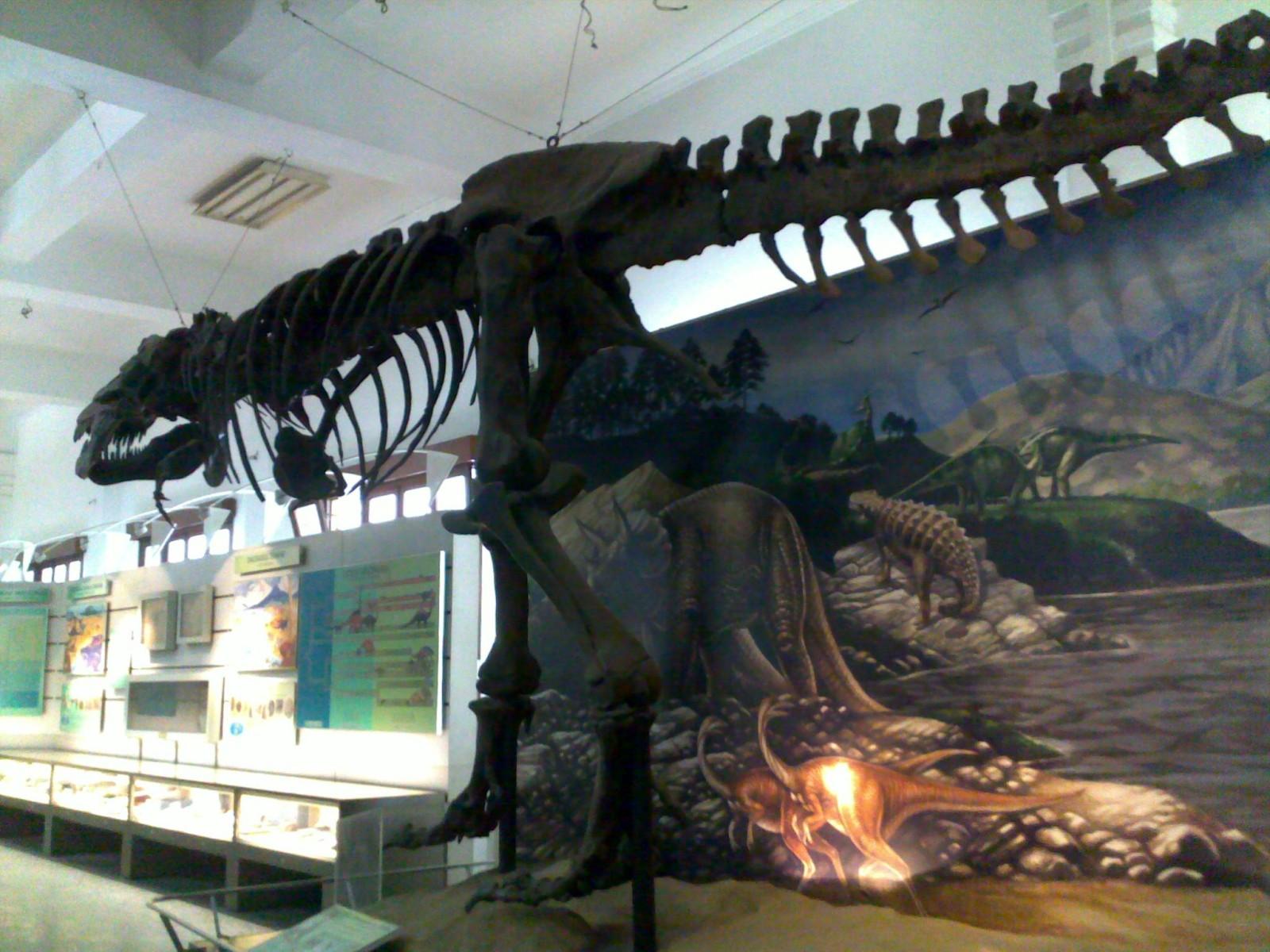 Museum Geologi: Fosil Tyrannosaurus rex osborn