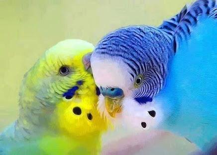 Um beijo!!!
