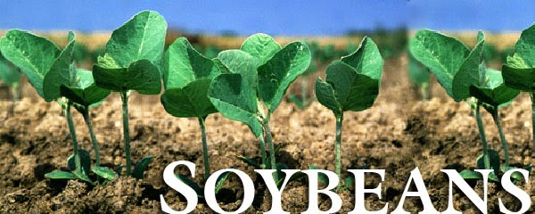 NCDEX soyabean, Agri Commodity Tips, Free Agri Tips, Future Trading Tips.