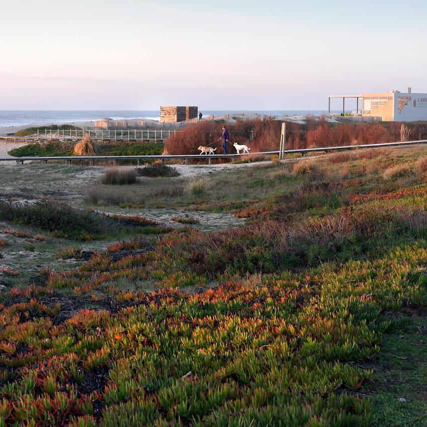 Ftoto do passadiço, junto ao mar, com um homem a passear dois cães, pela trela