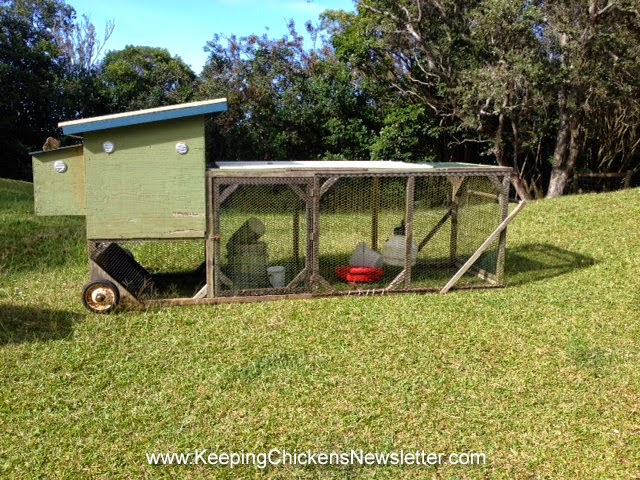 The Price Of Eggs. By Keeping Chickens ... - Raising Chickens : Keeping Chickens In Your Backyard