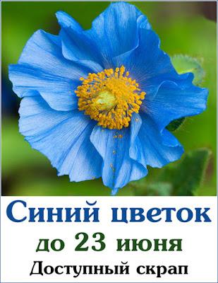 Синий цветок 23/06