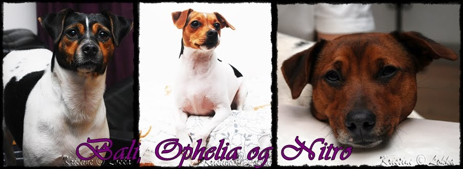 Bali, Ophelia  og Nitro