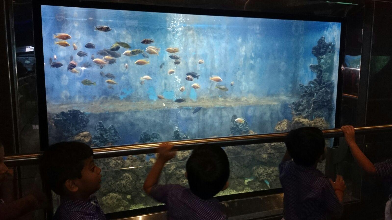 Fish aquarium tarapur - Taraporevala Aquarium