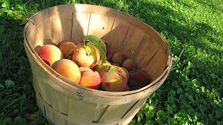 peaches bushel basket