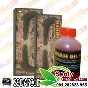 minyak lintah oil super asli ramuan obat mempembesar dan