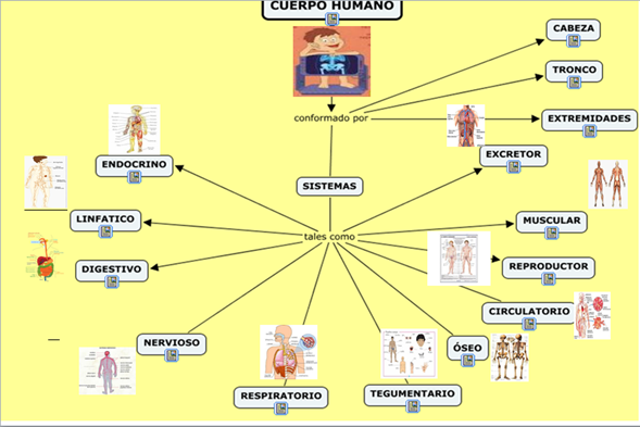 El Cuerpo Humano  El Cuerpo Humano