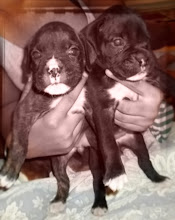 The Baby Girls {Ruby & Tess}