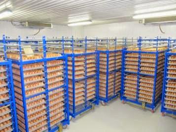 Хранение яиц в специальных яйцехранилищах
