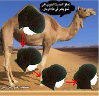 jilbab seperti punuk unta-novieffendi.com