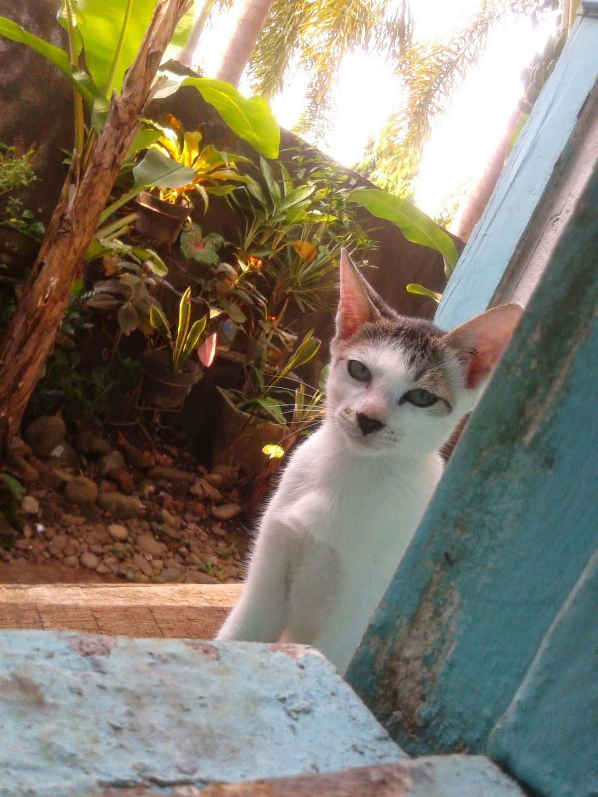 Putri Rahayulia Bagaimana Cara Menyembuhkan Kucing