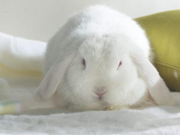 видео про белого кролика