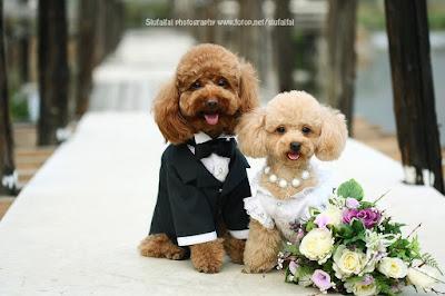 Como homenagear o animal no casamento
