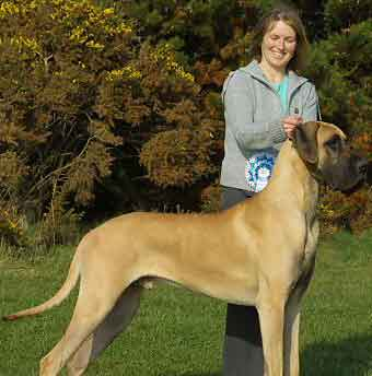 Great Dane Puppies on Great Dane Dogs And Puppies  Great Dane Dog